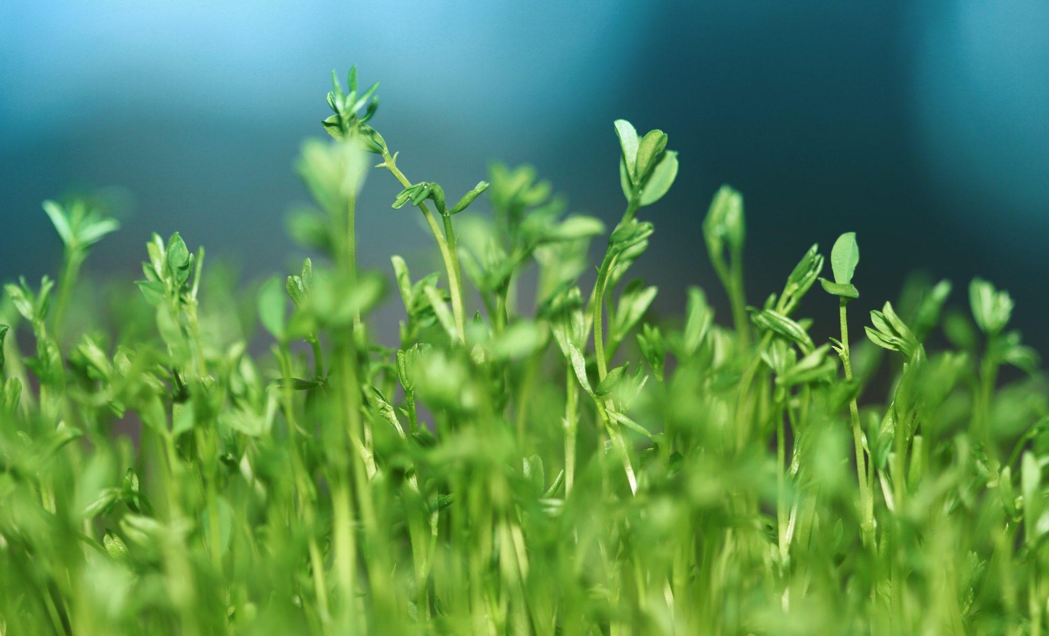 Czym jest wzrost dla Ciebie? Dlaczego warto się rozwijać?